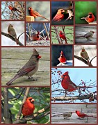 Rosanne Jordan - I Love the Cardinals