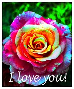 I Feel Prints - I Love You - Pink Rose - Greetings 2 Print by Barbara Griffin
