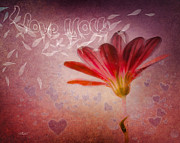 Rain Digital Art - I Love You by Jutta Maria Pusl