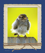 Baby Bird Posters - I Miss My Nest Poster by Betty LaRue