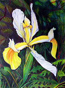 Floral Drawings Originals - I Rise To Thee by Nancy Cupp