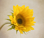 Yellow Art - I See Sunshine by Kim Hojnacki
