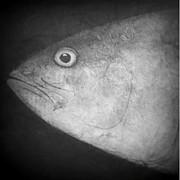 I See You - Fish Print by Patricia Januszkiewicz