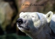 Polar Bears Prints - I Smell Chocolate Print by Mel Steinhauer