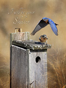 Bluebird Framed Prints - I will be your shelter Framed Print by Lori Deiter