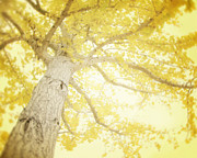 Yellow Leaves Photo Prints - I Will Remember You Print by Amy Tyler