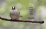 Rosanne Jordan Posters - I Will Wait For You Forever Poster by Rosanne Jordan