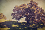 Oak Trees Prints - I Wish You Had Meant It Print by Laurie Search