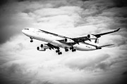 Passenger Plane Framed Prints - Iberia Airlines Airbus A340 Airplane in Black and White Framed Print by Paul Velgos