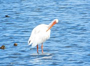 Cindy Croal - Ibis of Shackleford...