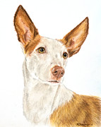 Pharaoh Drawings Posters - Ibizan Hound in Pastel Poster by Kate Sumners