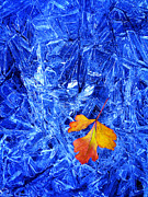 Coldest Prints - Ice Crystals and Fall Leaf Print by Lane Erickson