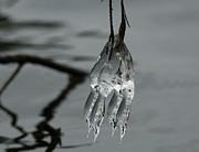 Ice Dance Print by Lara Ellis