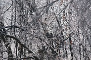 Joe Masucci - Ice Forest