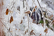 Plants Photos - Ice leaves by Guido Montanes Castillo