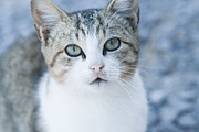 Abandoned Pets Photos - Ice Princess of the Ferals by Kathy Clark