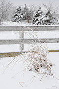 Old Fence With Snow Prints - Ice snow storm Print by Colleen Keizer