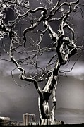 Poster  Sculpture Prints - Ice Veins in the Sky Print by Joenne Hartley