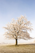 Haze Photo Posters - Iced Tree Poster by Anne Gilbert