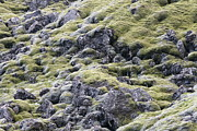 Texture Reliefs - Iceland Moss by Harvey Burns