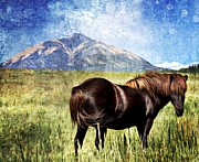 Northern Colorado Digital Art Prints - Icelandic Horse Print by Barbara Chichester