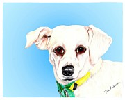 Animal Shelter Mixed Media - Icicle - a former shelter sweetie by Dave Anderson