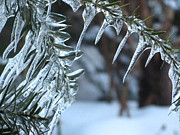 Nature Icicle Prints - Icicle Garden Print by Alfred Ng