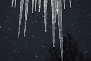 Snowy Night Night Photo Prints - Icicles and falling snow Print by Intensivelight