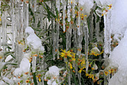 Ashley Mann - Icicles and Flowers