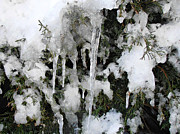 Kimberly Perry - Icicles on the Evergreen