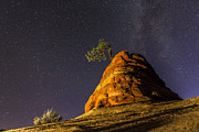 Laura Zirino - Iconic Zion Tree Under...