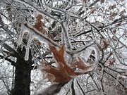 Melissa McCrann - Icy Beckoning