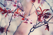 Sakura Prints - Icy Cherry Bloom. Pink Spring in Amsterdam Print by Jenny Rainbow