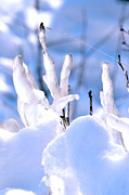 Winter Digital Photo Scene Posters - Icy twigs Poster by Tommy Hammarsten