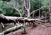 Gail Matthews - If a tree falls in the forest does anyone hear