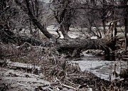 Floods Originals - If a Tree falls by Jon Burch Photography