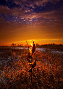 Milkweed Art - If Heaven Wasnt So Far Away by Phil Koch