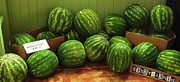 Watermelons Posters - If I Had A Watermelon Poster by Patricia Greer