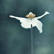 If  Petals Were Wings Print by Priska Wettstein