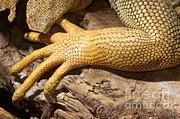John Mitchell - Iguana Scales