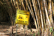 James Brunker - Iguanas Rule the Road