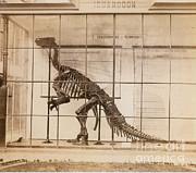 Iguanodon Skeleton Mesozoic Dinosaur Print by Science Source