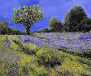 Bush Framed Prints - Il Campo Di Lavanda Framed Print by Guido Borelli