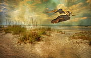 Brown Pelican Prints - Ill Be Home in the Evening Print by East Coast Barrier Islands Betsy A Cutler