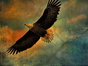 Eagle In Clouds Prints - Illumination Of Spirit Print by Deborah Benoit