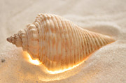 Sea Shell Digital Art Posters - Illumination Series Sea Shells 8 Poster by Sherry Allen