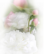 White Florals Prints - Illusions of White Roses and Pink Rosebuds Print by Jennie Marie Schell