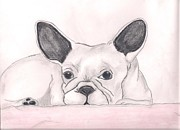 Puppies Drawings Framed Prints - Im sorry the cat told me to Framed Print by Danita  Higham