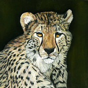 Cheetah Pastels Framed Prints - Im Watching You Framed Print by Sarah Dowson