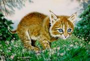Baby Bobcat Framed Prints - Ima Bobkitty Framed Print by DiDi Higginbotham